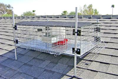 Pigeon Trapping in Sacramento
